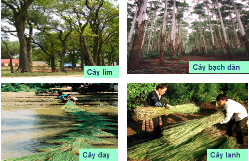 Một số loại cây lấy gỗ, lấy sợi