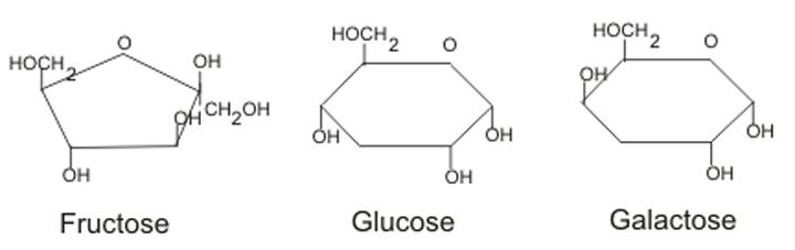 các đơn phân của cacbohyđrat