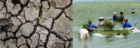 Ảnh hưởng của thời tiết, khí hậu tới cây trồng