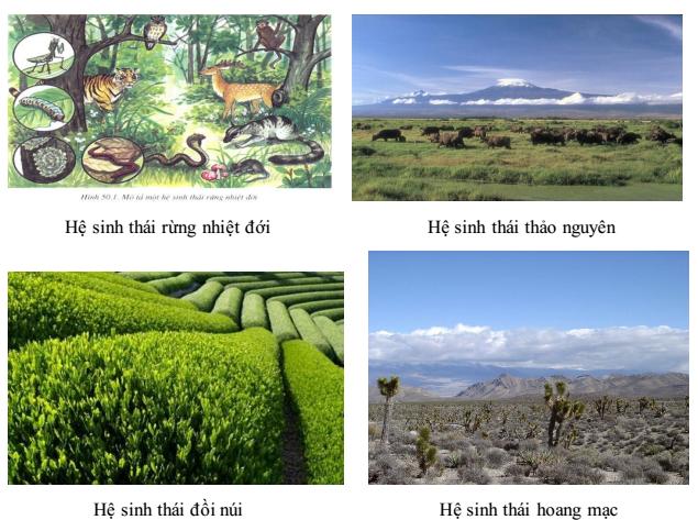 Hệ sinh thái núi đá vôi