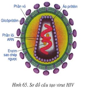 Sơ đồ cấu tạo virut HIV