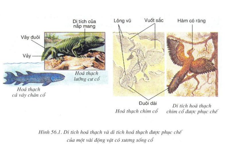 Di tích hóa thạch