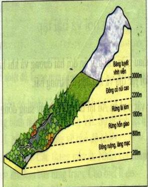 Hình 52.4. Sơ đồ phân bố thực vật theo độ cao của dãy núi Anpo