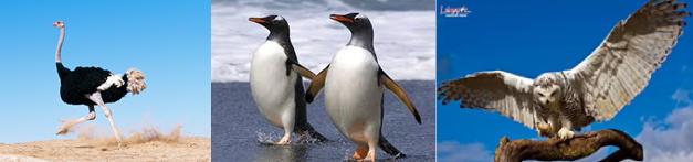 Đà điểu, chim cánh cụt, chim ưng