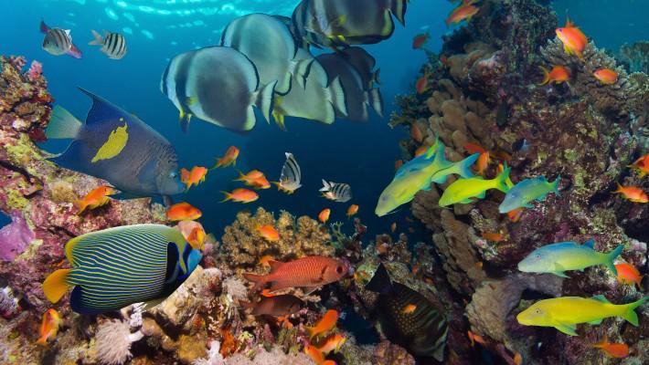 đa dạng động vật dưới nước