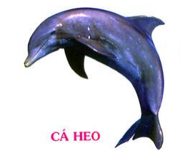 Cá heo