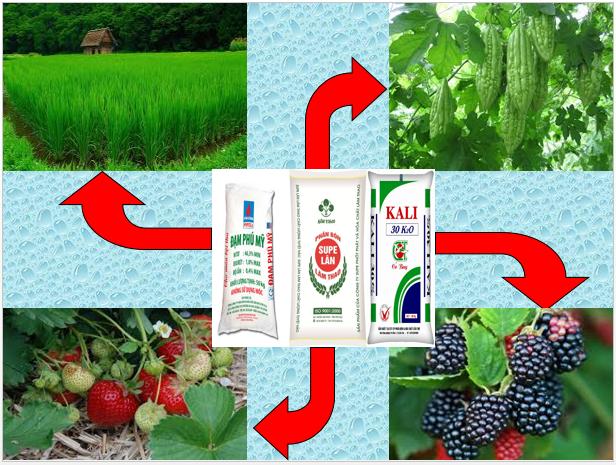Nhu cầu của Thực vật