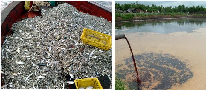 Chúng ta phải làm gì để bảo vệ và phát triển nguồn lợi cá?