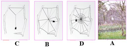 Quá trình chăng tơ ở nhện