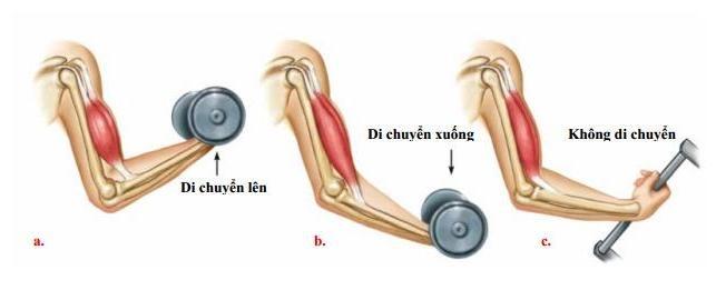 co giản của cơ