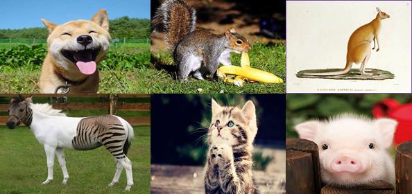 Một số động vật thuộc lớp Thú