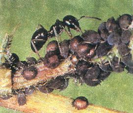 Tập tính ở kiến