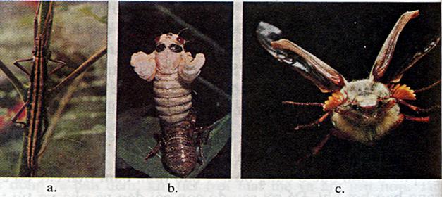 Thích nghi của côn trùng đất