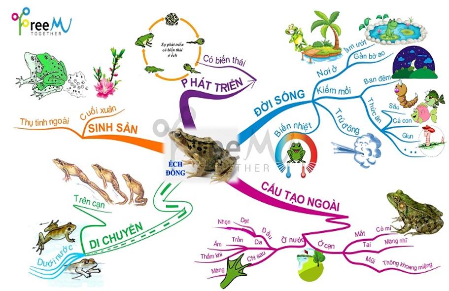 Sơ đồ tư duy ếch đồng