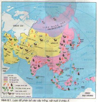 Hình 8.1. Lược đồ phân bố các cây trồng, vật nuôi ở châu Á