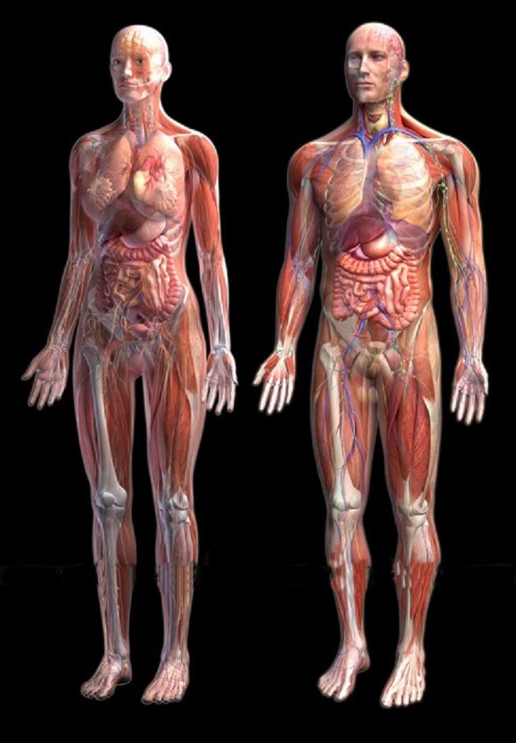 các bộ phận trên cơ thể người