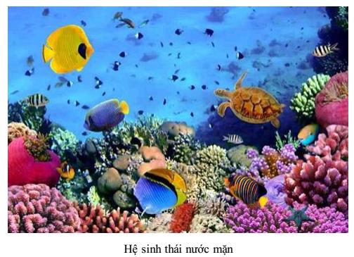 Hệ sinh thái dưới nước