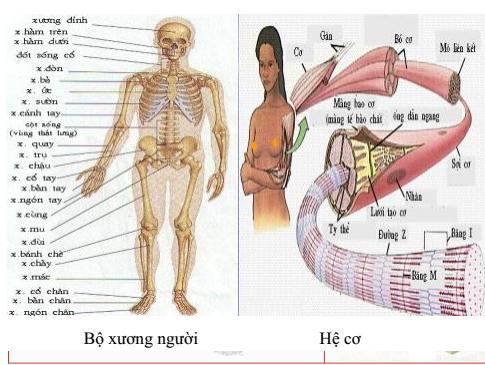 Sự vận động của cơ thể