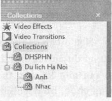 Ví dụ về cây thư mục Collections