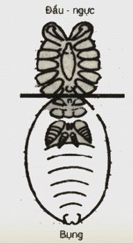 Cơ thể nhện