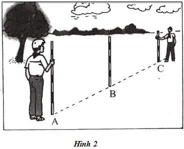 Thực hành Trồng cây thẳng hàng