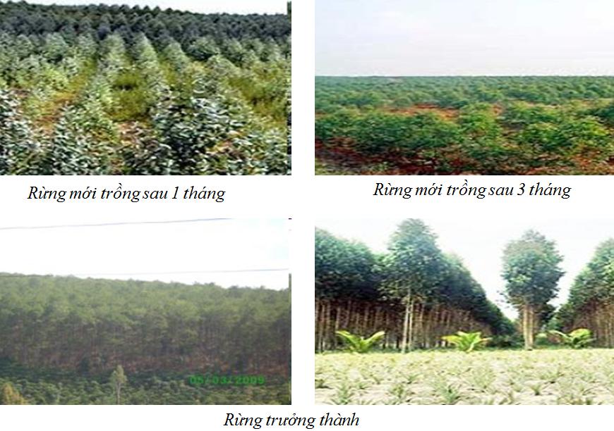 Công nghệ 7 Bài 27: Chăm sóc rừng sau khi trồng