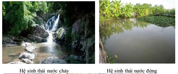 Hệ sinh thái nước