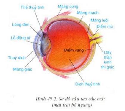 Sơ đồ cấu tạo cầu mắt