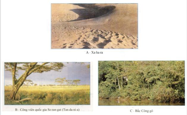 Hình ảnh SGK trang 39