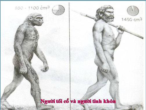 Người Tối cổ và Người Tinh khôn