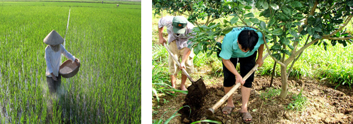 Bài 19: Các biện pháp chăm sóc cây trồng