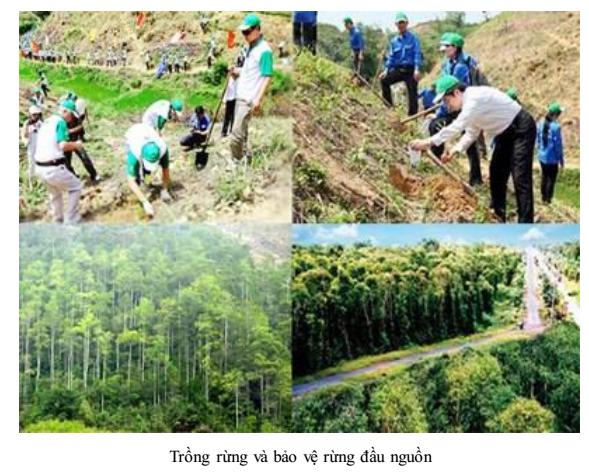 Biện pháp bảo vệ hệ sinh thái rừng