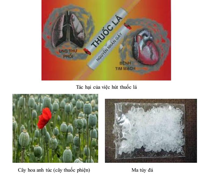 Chất gây nghiện