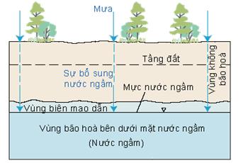 Description: https://sites.google.com/site/vaitrothucvat/_/rsrc/1466419837678/noi-dung/1-vai-tro-cua-thuc-vat-doi-voi-moi-truong/wcgwstoragezones.gif?height=286&width=400