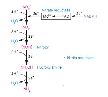 Quá trình khử nitơ