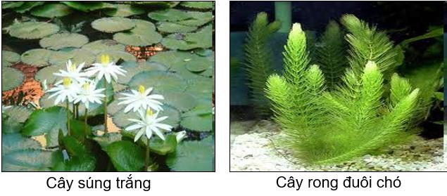 Cây sống dưới nước