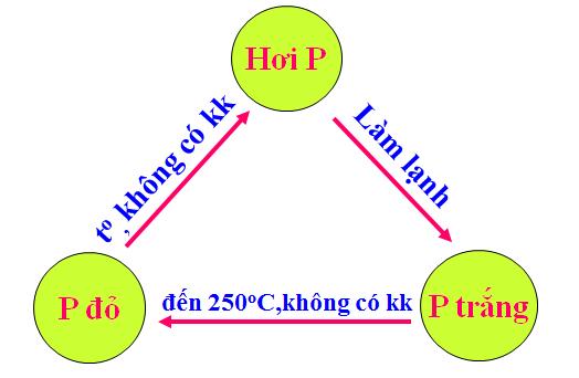 Sơ đồ chuyển hóa giữa Photpho trắng và Photpho đỏ