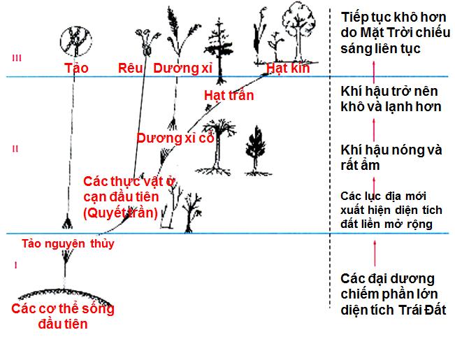 Sơ đồ phát triển của giới thực vật