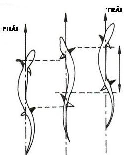 Cách di chuyển của thằn lằn