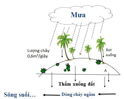 Thực vật góp phần bảo vệ nguồn nước ngầm