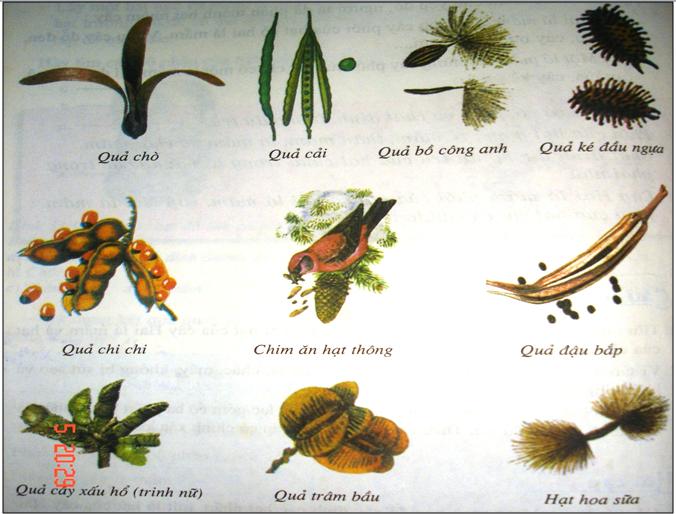 Một số loại quả và hạt