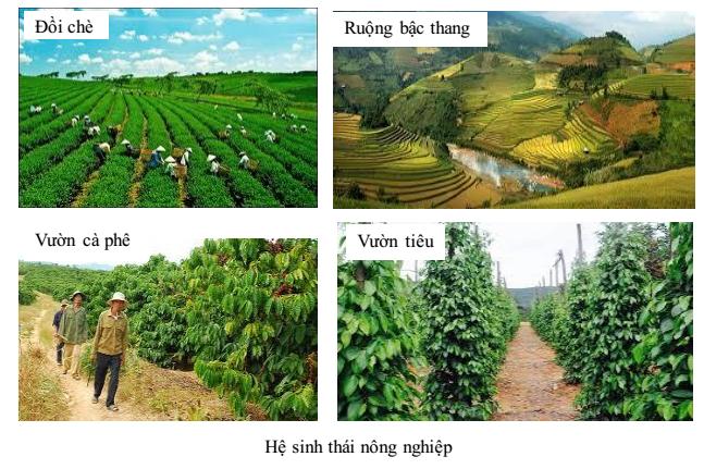 Hệ sinh thái nông nghiệp