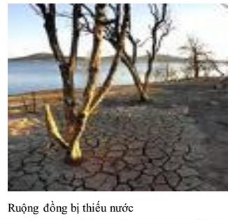 Ruộng đồng thiếu nước