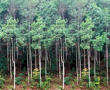 Khai thác rừng