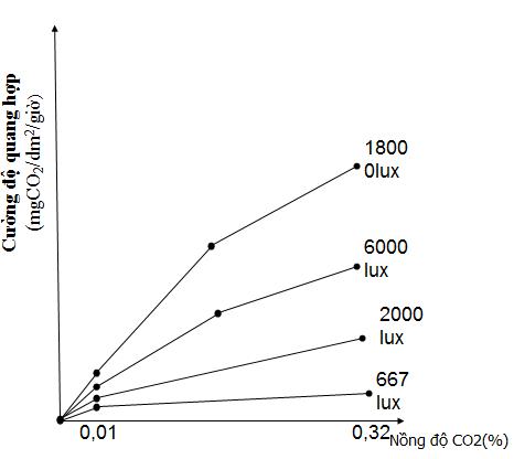 Ảnh hưởng của cường độ ánh sáng đến cường độ quang hợp khi nồng độ CO2 tăng