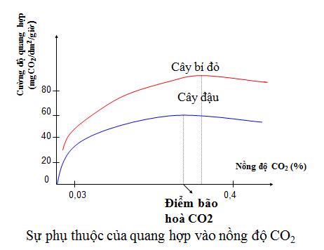 Sự phụ thuộc của quang hợp vào nồng độ CO2