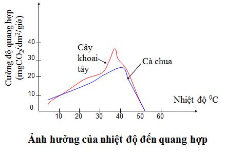 Ảnh hưởng của nhiệt độ đến quang hợp
