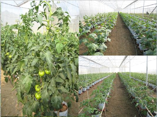 Mô hình trồng cây dưới ánh sáng nhân tạo