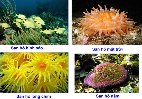 Một số dạng san hô