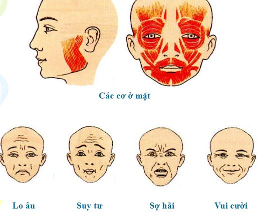 Các biểu hiện của cơ mặt
